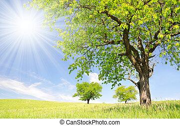 printemps, paysage