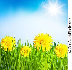 printemps, pelouse, pissenlits
