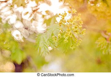 printemps, perles, jaune, texture, lumière, noël., argent, décoration, blured, bokeh, defocused, fond, mariage, fleurs, branche