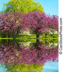 printemps, reflet