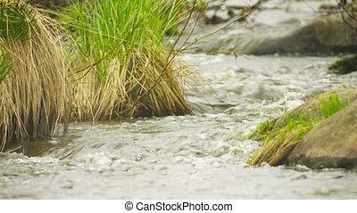 printemps, ruisseau, dans, les, nord, forêt, grand plan