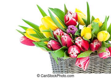 printemps, tulipes, dans, bois, panier, blanc, arrière-plan., heureux, enfante jour, romantique, nature morte, fleurs fraîches