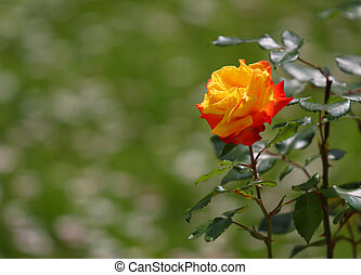 printemps, vert, jardin, fond, rose