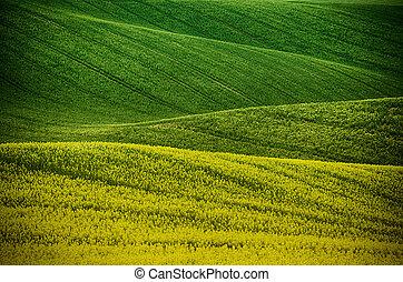 printemps, vert, rapeseed, champ jaune