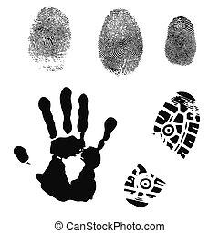 detailed fingerprints handprint and shoeprint over white background