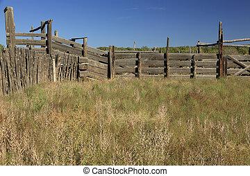 prise, bétail, corrals