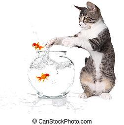 prise, poisson rouge, essayer, sauter, chat