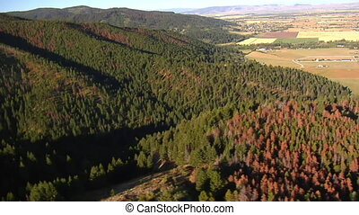 prise vue aérienne, de, champs, et, forêts, à, arbres morts