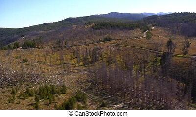 prise vue aérienne, de, forêt, et, montagnes, à, arbres morts