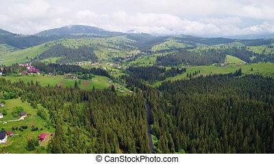 prise vue aérienne, de, forêt verte