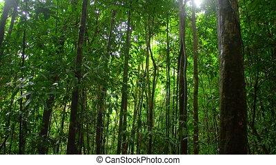 prise vue large, forêt
