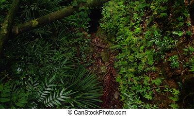prise vue large, jungle