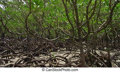 prise vue large, racines, arbres