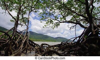 prise vue large, racines, montagnes
