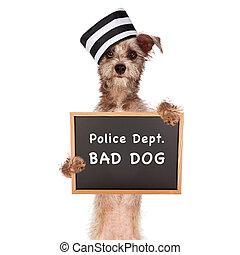 prisonnier, mauvais chien