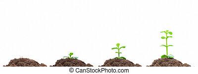 proces, od, zielony, plan, rozwój, w, soil., isolated., wzrost, pojęcie