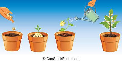 proces, rozwój, drzewo, pieniądze