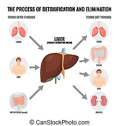 Process of detoxification and elimination cartoon medical...
