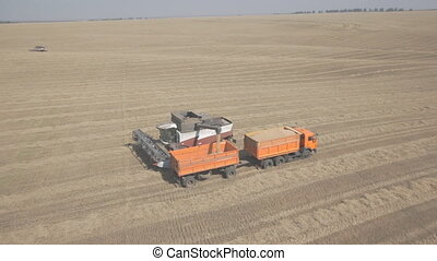 Process of unloading combine hopper into back of a truck on field. When grain hopper of machine is filled, it pulls truck with a trailer and unloads in his harvest. At the auger that is mounted in combine harvester of grain goes to back of machine, it fills up very quickly. Downloads occur in field ...