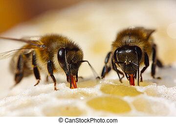 processo, miele, nettare, convertire