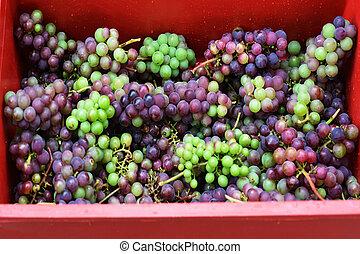 processus, confection, vin