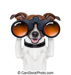 procurar, observar, binóculos, cão, olhar