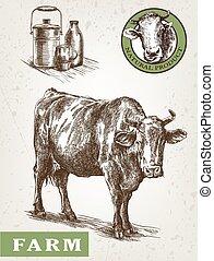 prodotti, mucca latte