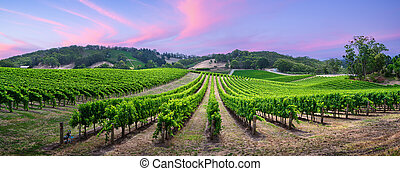 Producer - Stunning vineyard in the Adelaide Hills, South ...