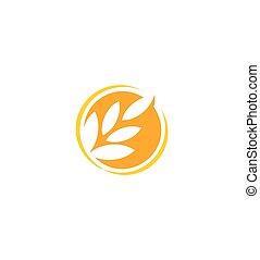produit, blé, icône, couleur nature, résumé, isolé, illustration, élément, logotype., vecteur, grain, agricole, orange, organique, oreille, logo., signe., rond, récolte