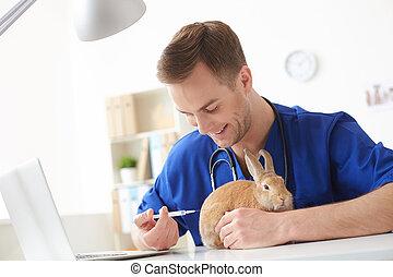profesional, macho, veterinario, es, curar, un, animal