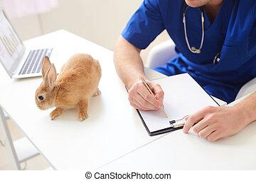 profesional, macho, veterinario, es, hacer, papeleo