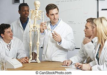 profesor, con, modelo, de, esqueleto humano, en, clase de biología