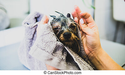 Professional care for pets in spa salon.  pet care consept