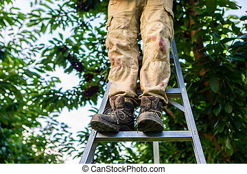 Feet of farmer busy in the garden. Migrant - seasonal farm worker at cherry harvest. Agricultural industry worker standing on the ladder