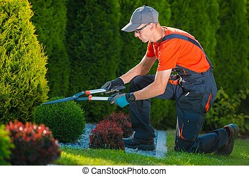 Professional Gardener at Work. Gardener Trimming Garden...