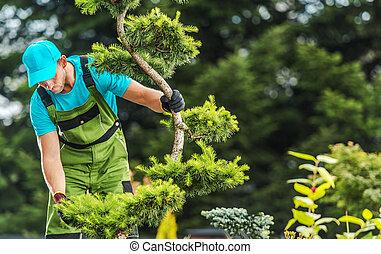 Gardener Checking Garden Tree Health