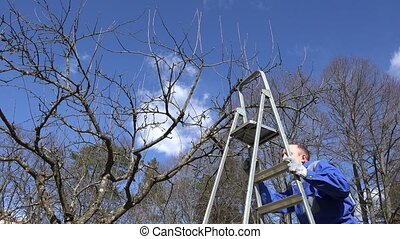 Professional gardener man climb on ladder and prune fruit tree branches