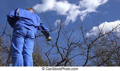 professional gardener man work with pruner in spring garden....