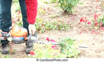 Professional gardener pruning an rose bush in the autumn HD...