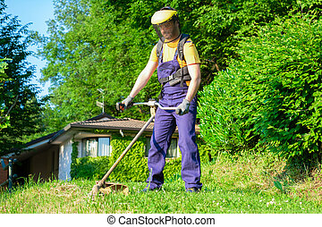 Professional gardener using an hedge trimmer in home garden
