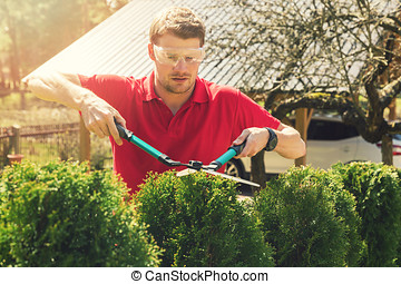 professional male gardener pruning hedge at home backyard