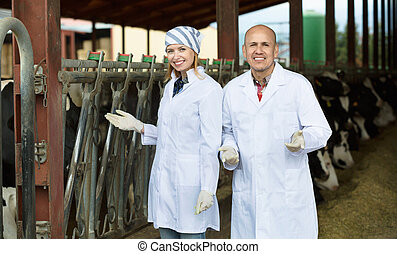 Professional workers in white gown taking care of dairy herd...