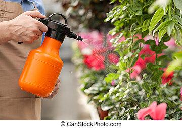 professioneel, senior, bloemist, is, bewaterende bloemen, op, het centrum van de tuin
