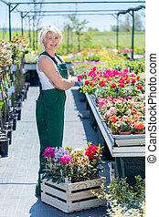 profi, nursery., munka, kertész