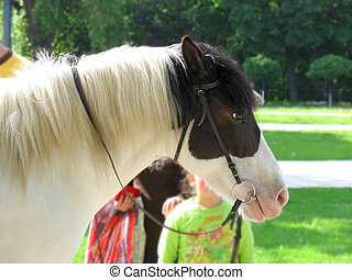 profil, cheval, childs, tête, fond