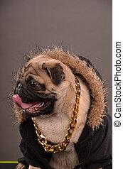 profil, chien pug