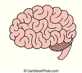profil, illustration, hjärna, vektor, mänsklig, sett