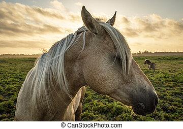 profil, koń, zachód słońca