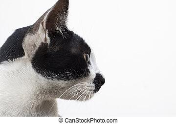 profil, o, kočka, bránit on, neposkvrněný