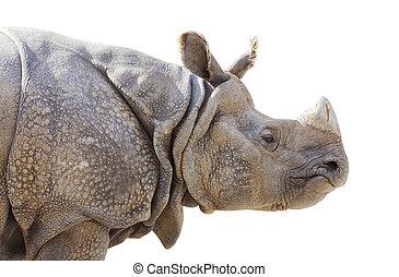profil, rhinocéros, isolé